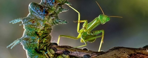 Video: La parábola de la mantis