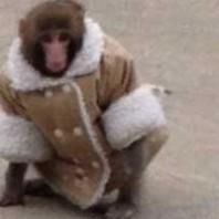 frase idiomática: aunque el mono se vista de seda…