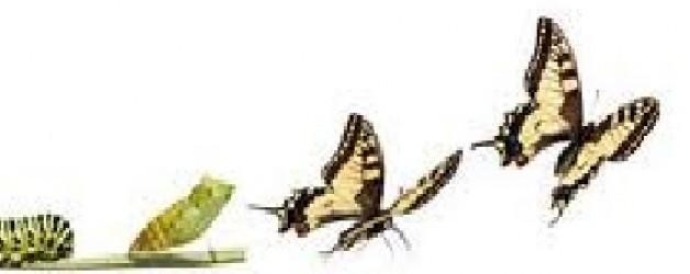 Cuadros: viñeta de Quino III, La transformación
