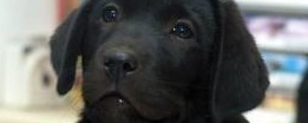 """Cuento: Pequeña parábola de """"Chindo"""" perro de ciego de  Camilo Cela"""