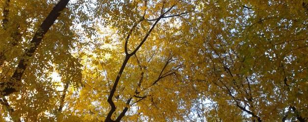 Poema: Primavera amarilla de J. R. Jiménez