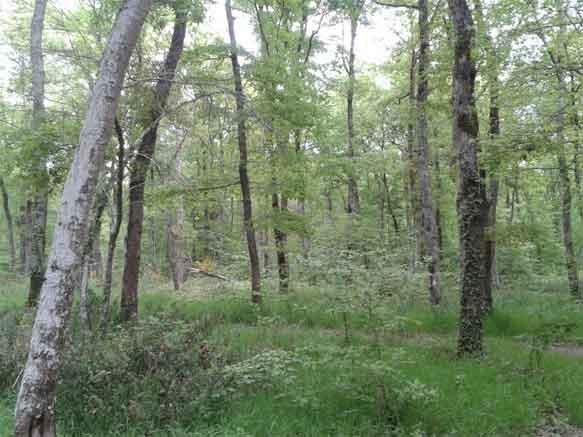 Forêt-de-la-bourg-990x742